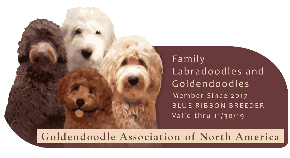Family Labradoodles And Goldendoodles Home