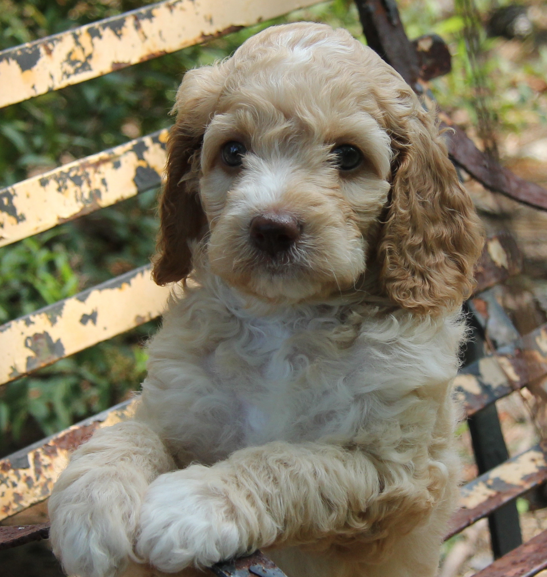 Our puppies have many different kinds of furs, from straight, curly, wavy, or fleecy.
