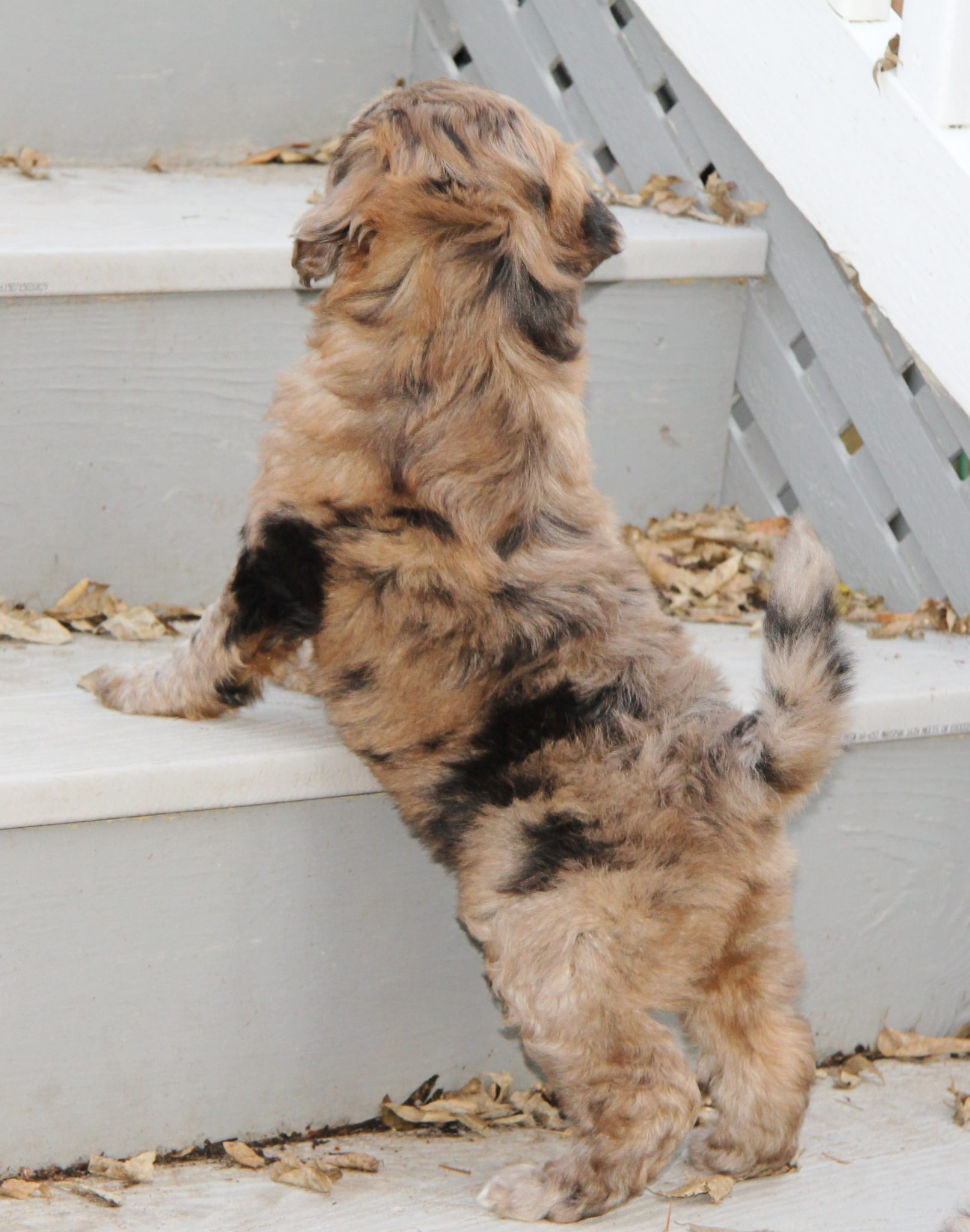 Traversing the stairs can be tough, but our puppies learn to face their fears!
